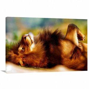 Quadro Leão Deitado Art decorativo