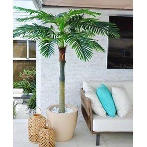 Palmeira Real Toque 2,10m Permanente (Apenas a Planta)
